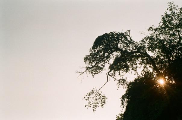 Để đi vào động, bạn gửi xe ở ngoài và đi bộ thêm tầm 1.5km đường núi nữa. Đây là cái cây mọc trên sườn núi, mình chụp lúc quay ra.